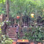 Les restos de Luang Prabang